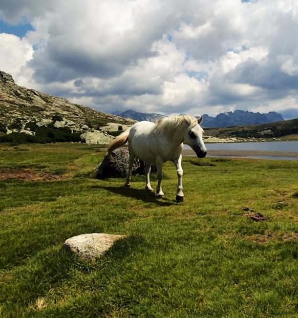 gr 20 korsika kůň Lac de Nino