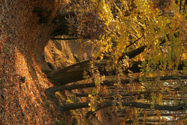 Cesta podzimním lesem. Poutní cesta Blaník Říp.