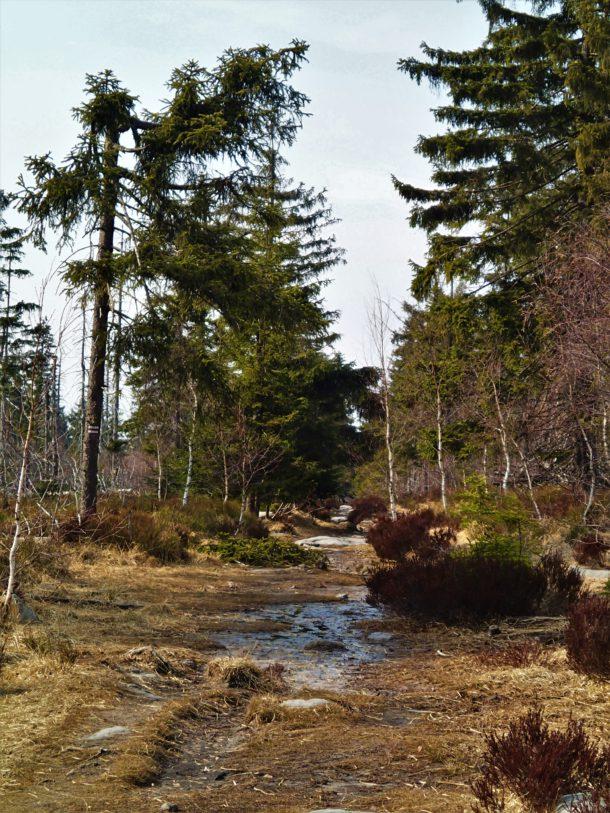 Trek. Cesta Pěšina Rašeliniště. Příroda